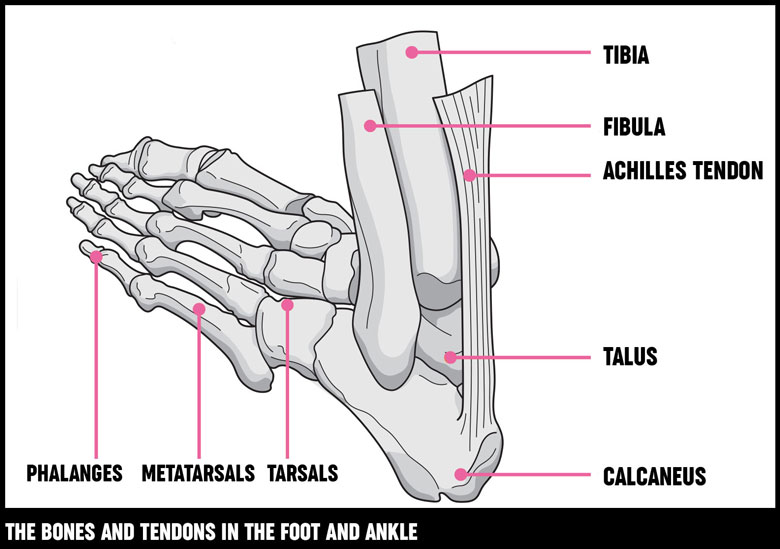 foot and ankle bones and tendons 780?width=500&height=351.92307692307696 foot and ankle surgery treatment options versus arthritis