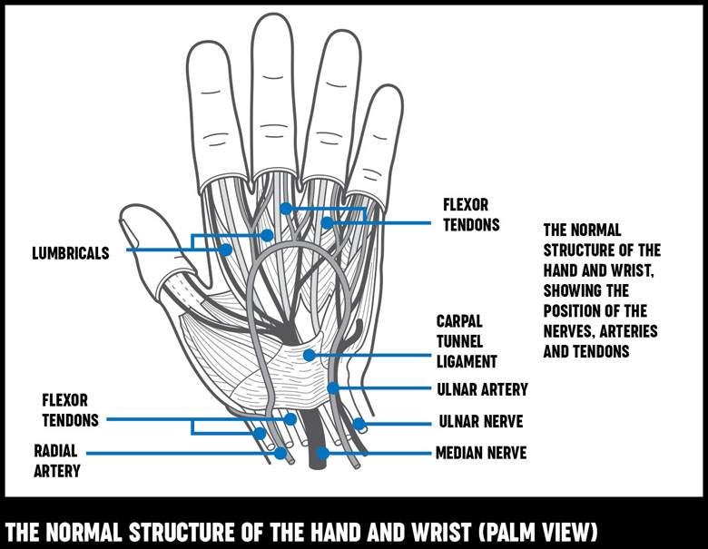 hand and wrist structure 780?width=500&height=387.8205128205129 hand and wrist surgery treatment options versus arthritis