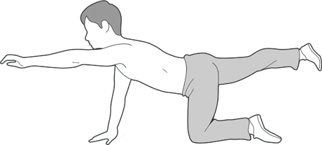 A diagram of someone kneeling on the floor with one arm and one leg lifted off the ground.