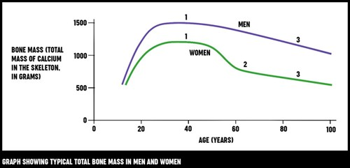 A graph showing typical total bone mass in men and woman across different age ranges.