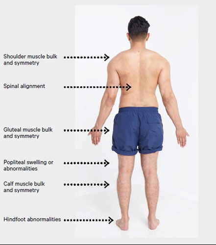 An image of the back of a man and what needs to be checked.