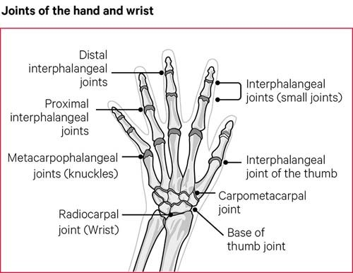hand spread assessment one